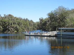 mangosjourney St Johns River Mar 3 010
