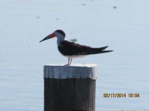 mangosjourney St Johns River Mar 3 015